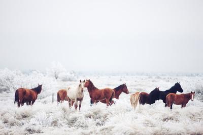 society 6 horses