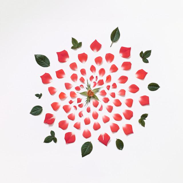 Rose Exploded 01, Singapore