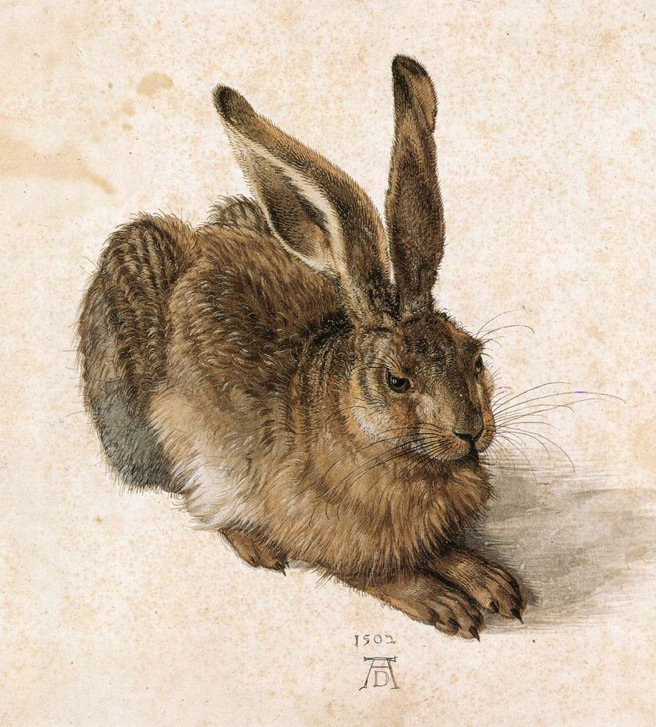 durer-a-young-hare