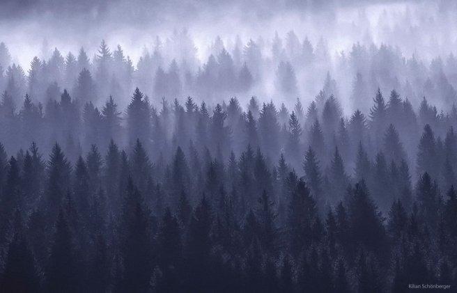 kilian schoenberger trees