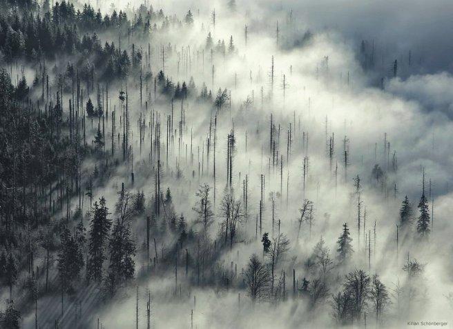 trees kilian