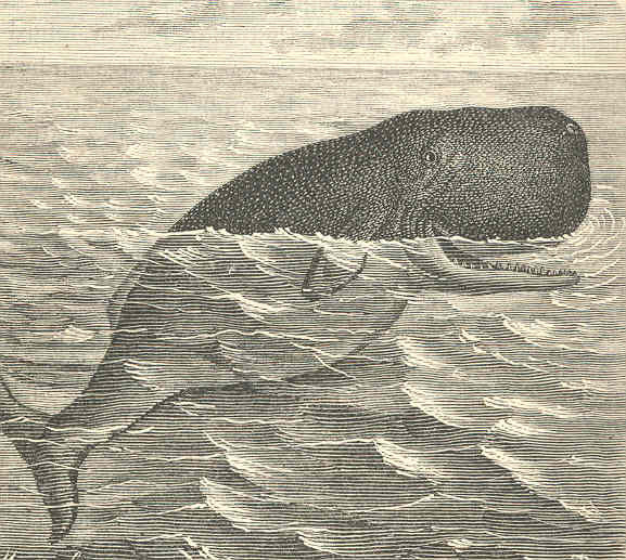 goofy whale