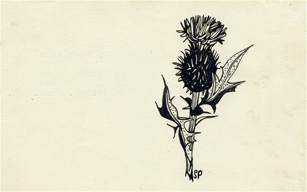 sylvia-plath-purple-thistle-drawing