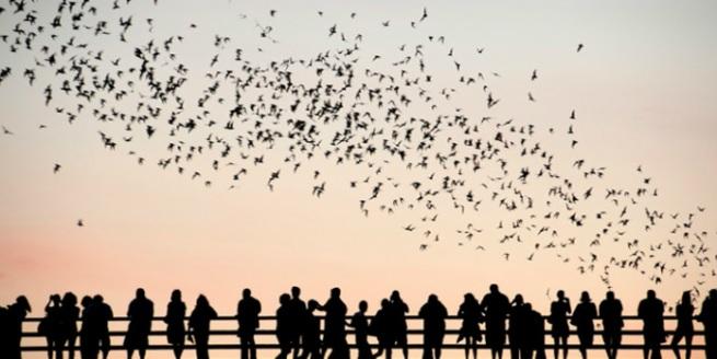 bats_austin
